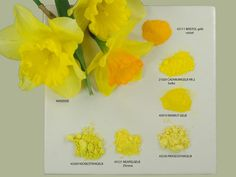 love this clever range of images to show pigments against real objects by monika titelius 2008  Daffodil and Pigments