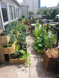 My balcony garden in full swing last year. Recommend me some veggies to grow in pots! - Imgur