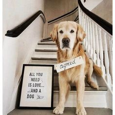 All you need is #love and a #dog.