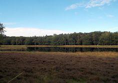 De Reünie wandeling van de Utrechtse Stertocht is 21 km wandelplezier door de bomen en het bos, over de Hoornboegse Heide en langs Hilversums Wasmeer.