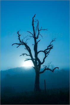 dead tree, sun, sunrise, blue, naked tree, Silhouette, mountains,nature, landscape