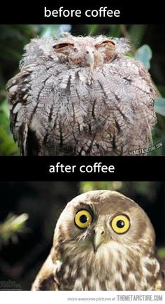 That before pic is EXACTLY how I feel before my first cup!!! LOL! ROUGH!