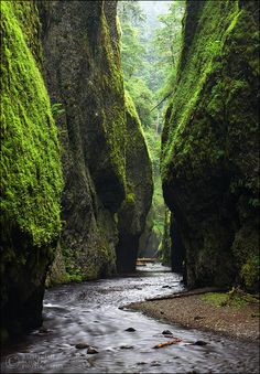 Fern canyon in the California Redwoods. Been here, and , yes, it's amazing