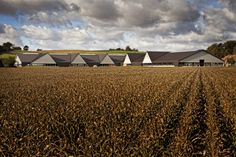 Vejlskovgaard Stable / LUMO Architects Completed in 2012 in Odder Denmark. New stable for 600 milk-producing cows and in connection to a family-owned old farm. The crosslike ground shape of the stable connects to different. Pre Engineered Metal Buildings, Agricultural Buildings, Old Farm, Stables, More Pictures, Unique Photo, Country Life, Modern Architecture, Vernacular Architecture