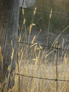 Rustic Fence in a Meadow