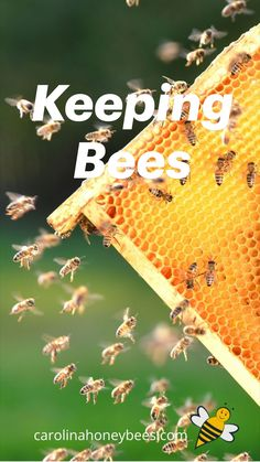 Bee Quotes, Beekeeping For Beginners, Backyard Beekeeping, Homemade Lip Balm, Bee Art, Rainwater Harvesting, Small Moments, Honey Recipes, Bee Keeping