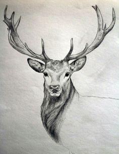 Jeleń - szkic (deer sketch)