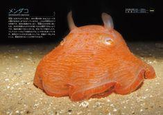Deep Sea Creatures, Cuttlefish, Jellyfish, Underwater, Science, Detail, Animaux, Water, Medusa