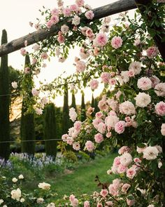 Pink roses under the Tuscan sun.My eyes go southward again on this cold, rainy morning! Have a lovely day! Image by Cottage Garden Design, Cottage Gardens, Under The Tuscan Sun, Climbing Roses, Dream Garden, Garden Planning, Backyard Landscaping, Pink Roses, Bella