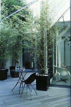 bamboo plants in big, geometric pots outside/inside front windows