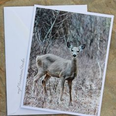 Whitetail Deer Photo Note Card by myMountainStudio.