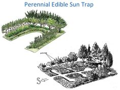 Perennial edible sun trap (permaculture design forum at permies)