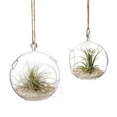 Air Plant Terrarium Garden Hanging Glass Globe by PostmarkFlowers