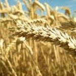 Ukraine's Agriculture Ministry is ready to impose measures to defend the local grains market if a sharp devaluation in the country's hryvnia currency causes a jump in exports, says Deputy Minister Volodymyr Lapa.