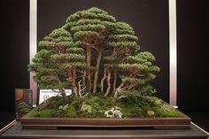Stunning!      European bonsaï San Show 2013, Saulieu France
