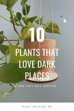 We all know the dark corner of the home where nothing green can grow! But maybe we just don't know what to put over it to grow. That's why we've created a 10 plant guide for you. Plant Guide, Bedroom Plants, Dark Places, Deco, House Plants, Rum, Landscapes, Planters, Corner