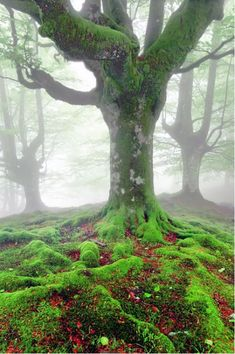 Amazing Forests from $34.99 | www.wallartprints.com.au #ForestPictures #LandscapePhotography