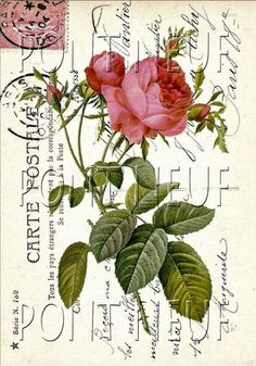 French Postcard VINTAGE FLOWERS
