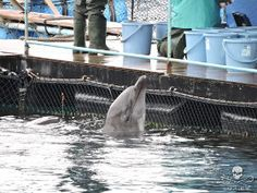 Sea Shepherd's Cove Guardians will continue to monitor the hunt in Taiji