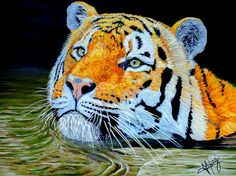 Tiger 24x18x1 inch oil on Gallery canvas by ManuelLopezFineArt