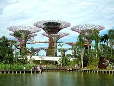 "Gardens by the Bay, Singapore's premier urban outdoor recreation space right next to Mariana Bay Sands, unveiled a new attraction last month - a cutting-edge horticultural mega project featuring 18 towering solar-powered ""supertrees"" and climate-controlled biomes."