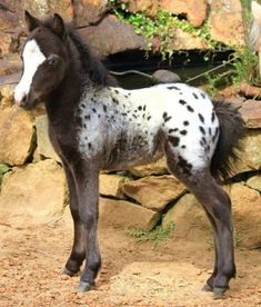 Spotted Foal