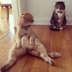 Shrampton - Flopping, Sitting Cat On Instagram