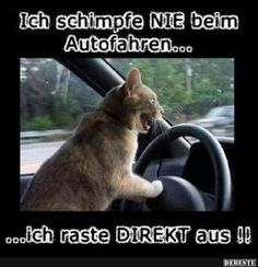 Ich blockiere lustige Katzen - Katzenfutter in Katzen, Drive In, Most Hilarious Memes, Funny Memes, Funny Animal Pictures, Cute Funny Animals, Silly Cats, Funny Cats, Cool Cats, Gatos Cool