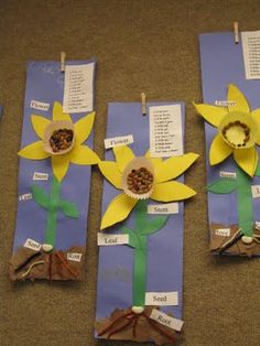 Science- plants: different parts of a plant diagram using mini-muffin cups for the daffodil cups.