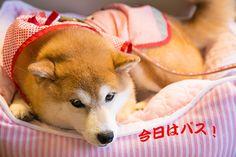 里親さんブログささやかな抵抗 - http://iyaiyahajimeru.jp/cat/archives/66564