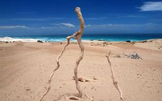 fulgurite - This is what is created when lightning strikes sand... Amazing!