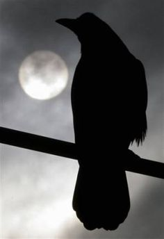 """Raven Illuminated in Full Moon (Once upon a midnight dreary, while I pondered, weak and weary, Over many a quaint and curious volume of forgotten lore, While I nodded, nearly napping, suddenly there came a tapping, As of some one gently rapping, rapping at my chamber door. """"'Tis some visitor,"""" I muttered, """"tapping at my chamber door Only this, and nothing more."""" Poe)"""
