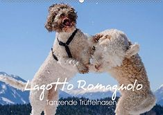 Lagotto Romagnolo, Hate Cats, House Rabbit, Dog Mom Gifts, Dog Hacks, Super Funny, Dog Owners, Nice View, Fur Babies