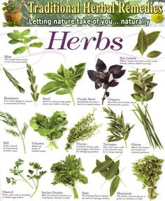 5 Medicinal Herbs Used Since Ancient Greece | Ancient ...