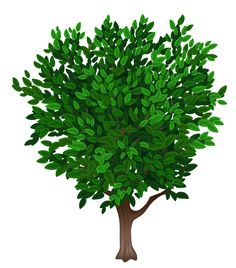 Tree Transparent PNG Clipart Picture