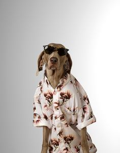 #danmatthews #photography #dog #cooldude #stilllife #advertising #FHM #portraiture #coolshirt #minime #dude #sunnies #studio #cute
