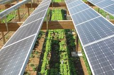 Rates are the very low for commercial, rentals, farms, solar, and homes. Please call me with any financing needs 302-740-6858. Renewable Energy, Solar Energy, Solar Power, Shrimp Farming, Interior Design Videos, Photovoltaic Cells, Solar Installation, Top Soil, University Of Arizona