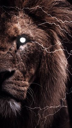 The Lion Wallpaper - iPhone Wallpapers