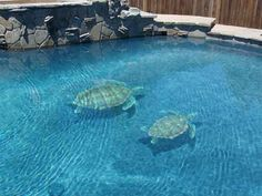Changing The Look Of Swimming Pool 3D Ceramic Tile Art (11) 1
