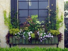 A great window box is rhythmic. Decide if you want the height in the middle, or at the ends. A uniform height is a more contemporary look.  The colors of nicotiana-terra cotta, and 2 shades of lime, set the stage for this box.  All the supporting cast plants repeat color, or contrast in texture.  A lime green variety of hops is growing on wires outside the shutters. Wispy small growing grasses are great in boxes, as they are neither upright nor trailing. Deborah Silver