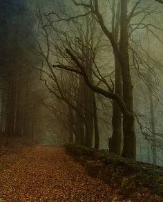 The Forest of Doom. By alyssthomas on Flickr.