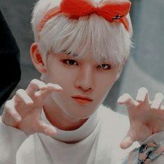 Jinyoung, Bae, Boy Idols, Popular Music, Korea, Kpop, Animals, Fictional Characters, Icons