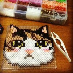 Kayla the kitten perler beads by liuyu916