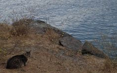 In 1992, a woman named Ursula Elliot noticed many feral cats hiding between jetty rocks in Gold Beach, Oregon. The pitiful felines had no shelter, no food or water, and had to suffer in the wind and the rain in the cold winters.  These kitties had been abandoned by their owners, unwanted and unlov