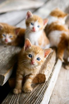 Barn Kittens via Yonder Way Farm, Brenham, Texas