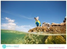 pet and family portraits in the Turks and Caicos...Chulo the T&C French Bulldog   Photos by Brilliant by Tropical Imaging