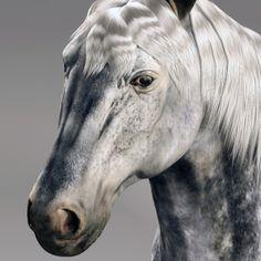 12 Best Horse Animal by CG ARTStudio images in 2014 | Art