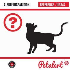 Cette Alerte est désormais close : elle n'est donc plus visible sur la plate-forme www.petalert.ch. L'émetteur de cette Alerte ne s'est plus manifesté, malgré nos relances. Merci pour votre aide.