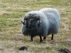 dikke wol kopen - Google zoeken