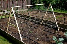 How to Garden Vegetables | Cucumbers need support. I have never given my cucumbers support. My ...